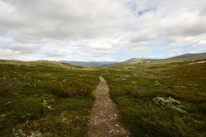 Høgfjellslandskapet på Dovrefjell innbyr til vandring.